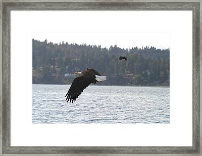 Double Trouble Eagles Framed Print by Kym Backland