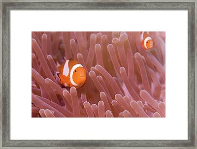 Double Vision Framed Print by Steven Trainoff Ph.D.