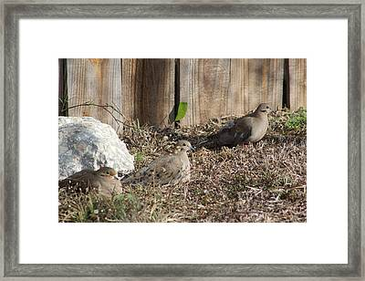 Dove On The Ground Framed Print by Alain roger  Fotso dada