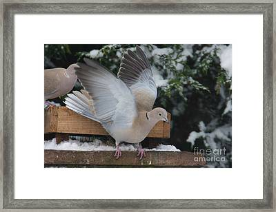 Dove On The Wing Framed Print