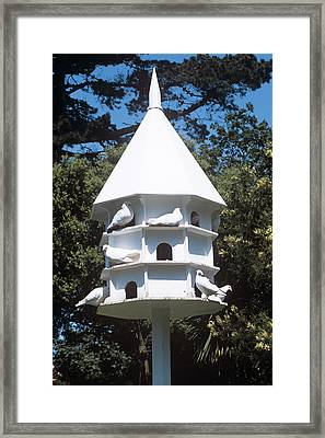 Doves Framed Print by Adrian Thomas