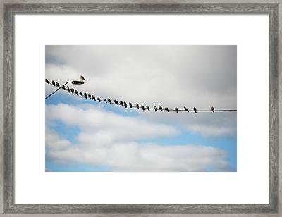 Doves In Line On Power Cord Framed Print