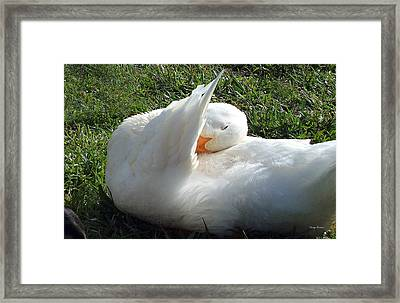 Framed Print featuring the photograph Down Pillow by George Bostian