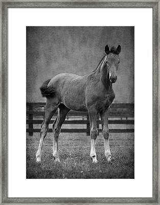 Drago Framed Print