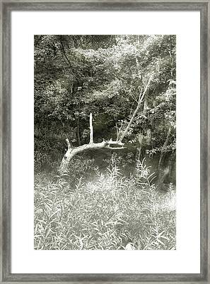 Framed Print featuring the photograph Dragon Bones by Mary Almond