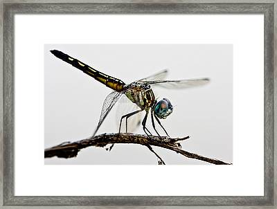 Framed Print featuring the photograph Dragon by Dan Wells