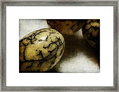 Dragon Eggs Framed Print by Judi Bagwell