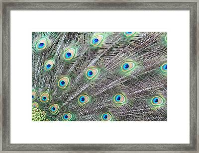 Framed Print featuring the photograph Dragon Eyes by Amy Gallagher