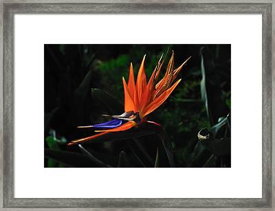 Dragon Flower Framed Print by Richard Leon