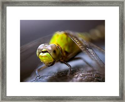 Framed Print featuring the photograph Dragon-fly  by Anna Rumiantseva