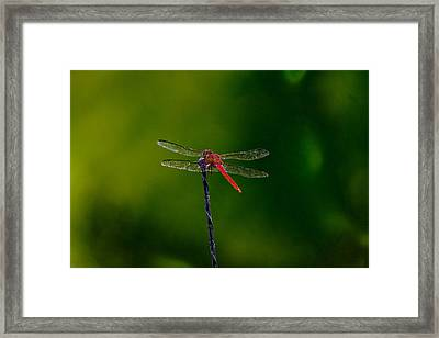 Dragon Fly At Rest Framed Print by David Alexander