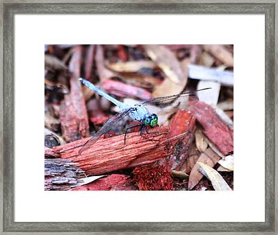 Framed Print featuring the photograph Dragon Fly by Jeanne Andrews
