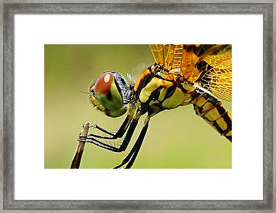 Dragon Fly Framed Print by Michelle Armstrong