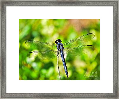 Framed Print featuring the photograph Dragon Fly Spread by Eve Spring