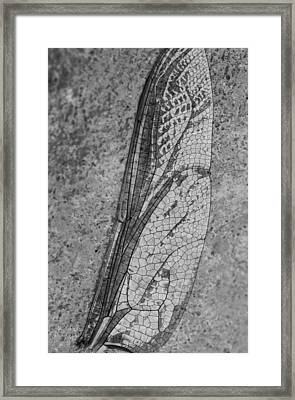 Dragon Fly Wing Framed Print