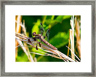 Dragon On The Prowl Framed Print by Barry Jones