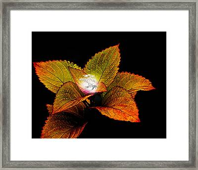 Dragon Plant Patronus Framed Print by Michael Taggart