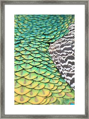 Dragon Scales Framed Print