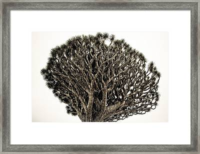 Dragon Tree Framed Print by Justin Albrecht