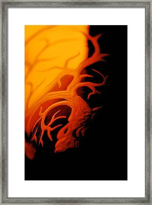 Dragonfire Framed Print