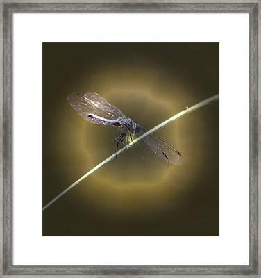 Dragonfly 1 Framed Print by Judith Szantyr
