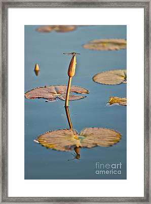Framed Print featuring the photograph Dragonfly And Lotus by Luciano Mortula