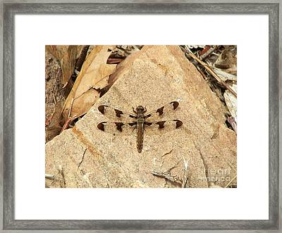 Framed Print featuring the photograph Dragonfly At Rest by Deniece Platt