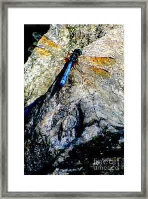 Dragonfly Blue Framed Print by Maria Scarfone