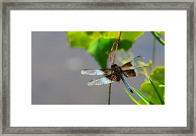 Dragonfly Framed Print by Cindy Manero