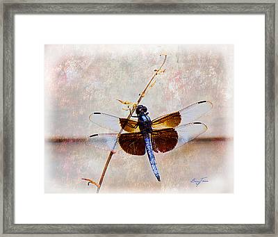 Dragonfly Clinging Framed Print by Barry Jones