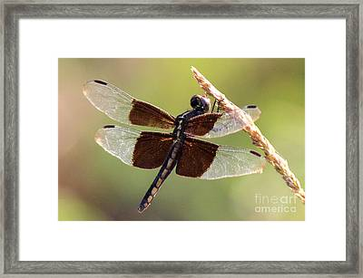 Framed Print featuring the photograph Dragonfly Closeup by Kathy  White