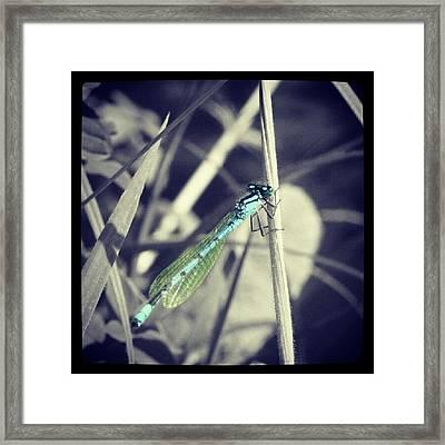 Dragonfly. #dragonfly #blackandwhite Framed Print