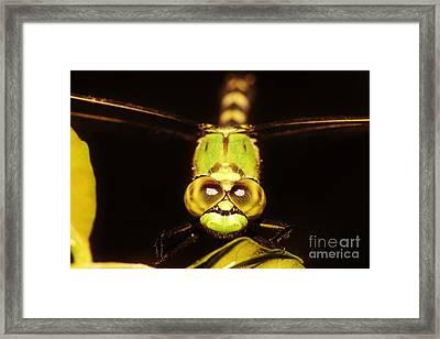 Dragonfly Eyes Framed Print