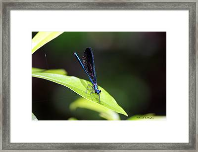 Dragonfly Fly Framed Print