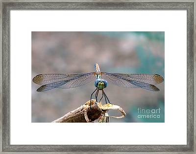Dragonfly Headshot Framed Print by Graham Taylor