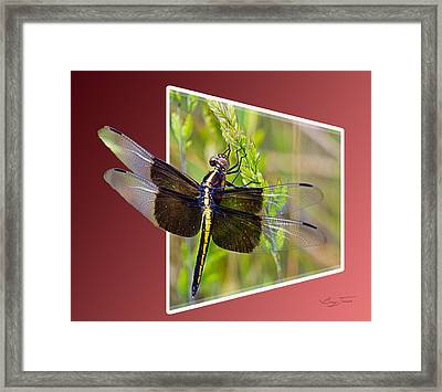 Dragonfly Holding On Framed Print by Barry Jones