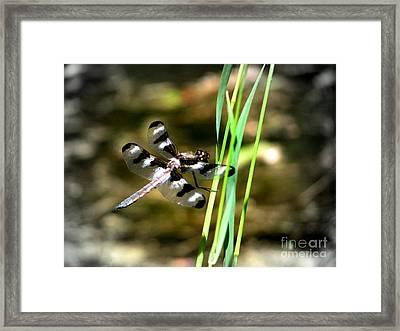 Dragonfly Framed Print by Irina Hays