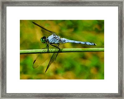 Dragonfly Framed Print by Jack Zulli