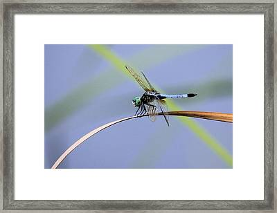Dragonfly Framed Print by Laura Oakman