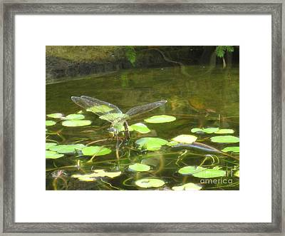 Dragonfly Framed Print by Laurianna Taylor