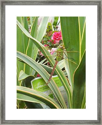 Dragonfly Framed Print by Laurie Kidd
