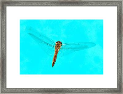 Dragonfly Framed Print by Miguel Capelo