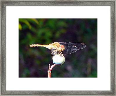 Dragonfly On Sphere Framed Print by Mark Haley