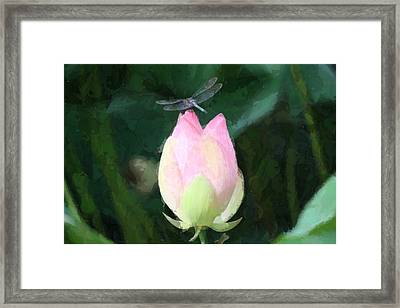 Dragonfly On Water Lily Framed Print by Donna  Smith