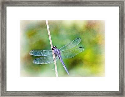 Dragonfly Respite 001 Framed Print by Barry Jones
