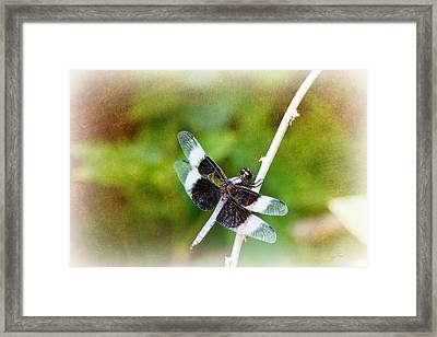 Dragonfly Respite 002 Framed Print by Barry Jones