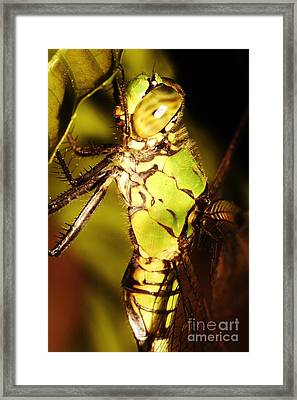 Dragonfly Side Framed Print