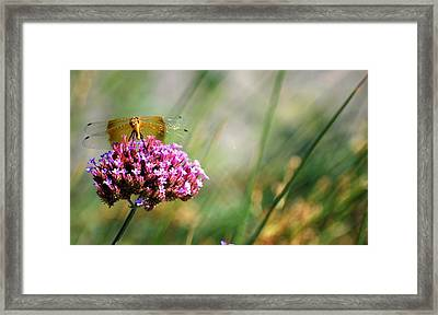 Framed Print featuring the photograph Dragonfly Wings by Amee Cave