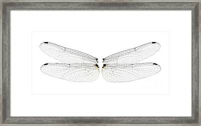 Dragonfly Wings Framed Print by Raul Gonzalez Perez