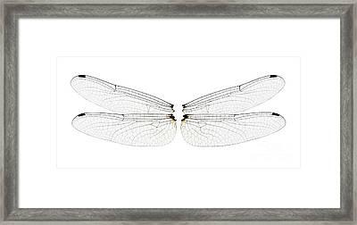 Dragonfly Wings Framed Print by Raul Gonzalez Perez